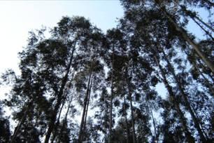 Cresce a demanda de madeira no Brasil e já há quem fale em apagão florestal. Qual a solução?